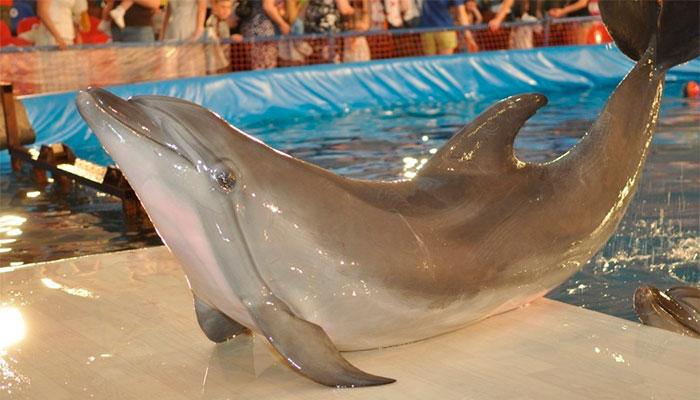 Дельфинарий Атлантида