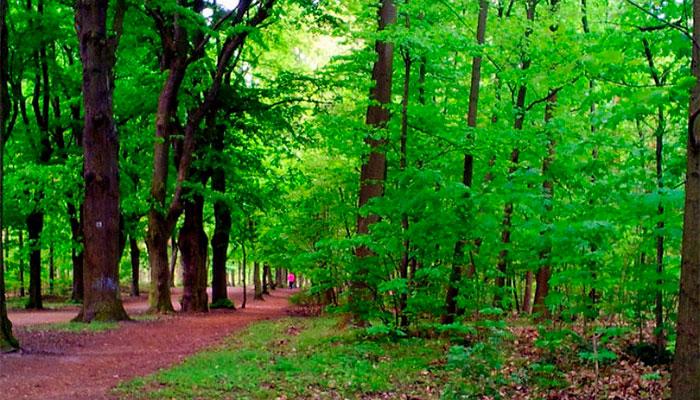 Грюнвальдский лес