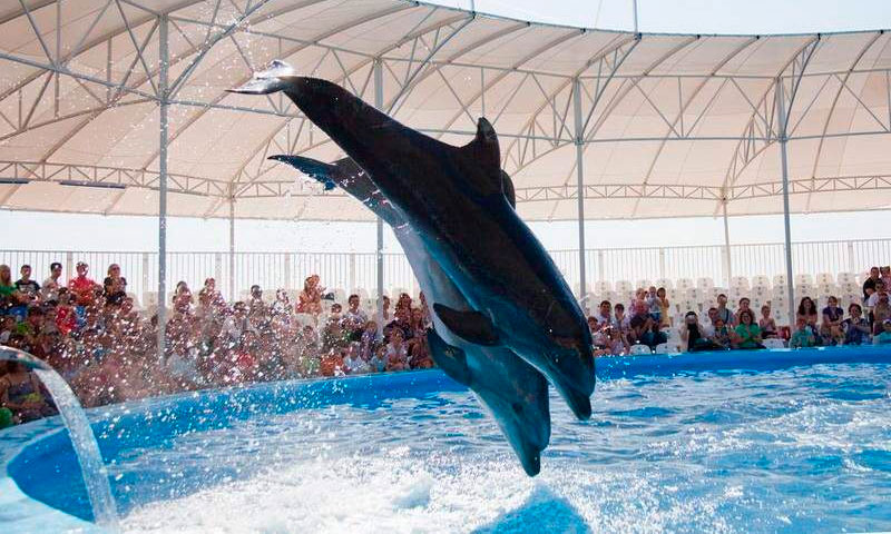 Феодосийский дельфинарий «Немо»