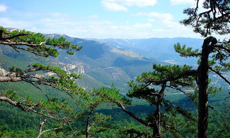 Ялтинский горно-лесной природный заповедник