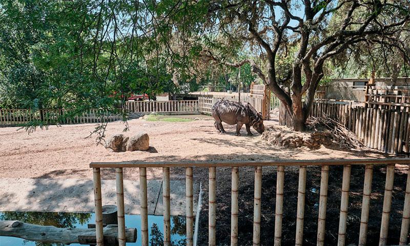 Мадридский зоопарк и аквариум