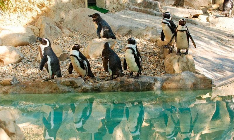 Зоопарк Bioparсo