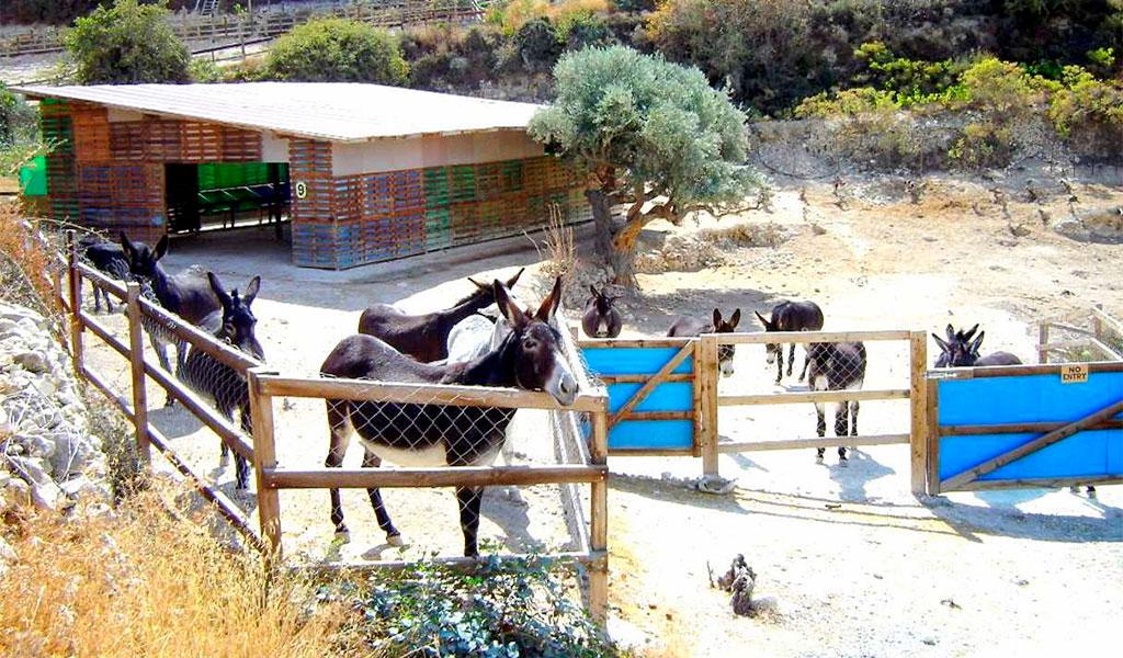 Приют для осликов