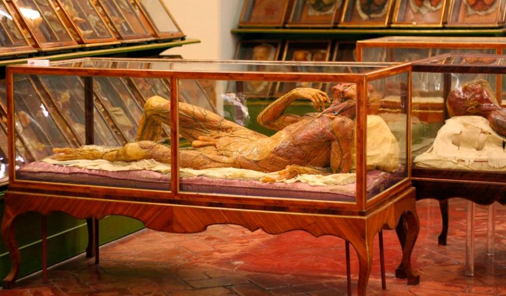 Музей анатомии человека