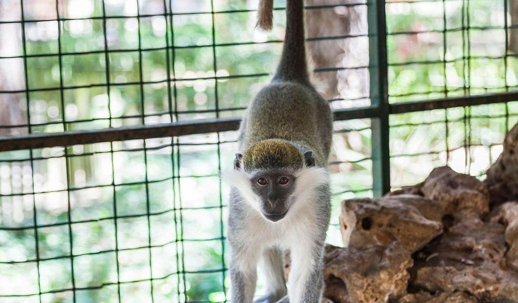 Зоопарк Bellis