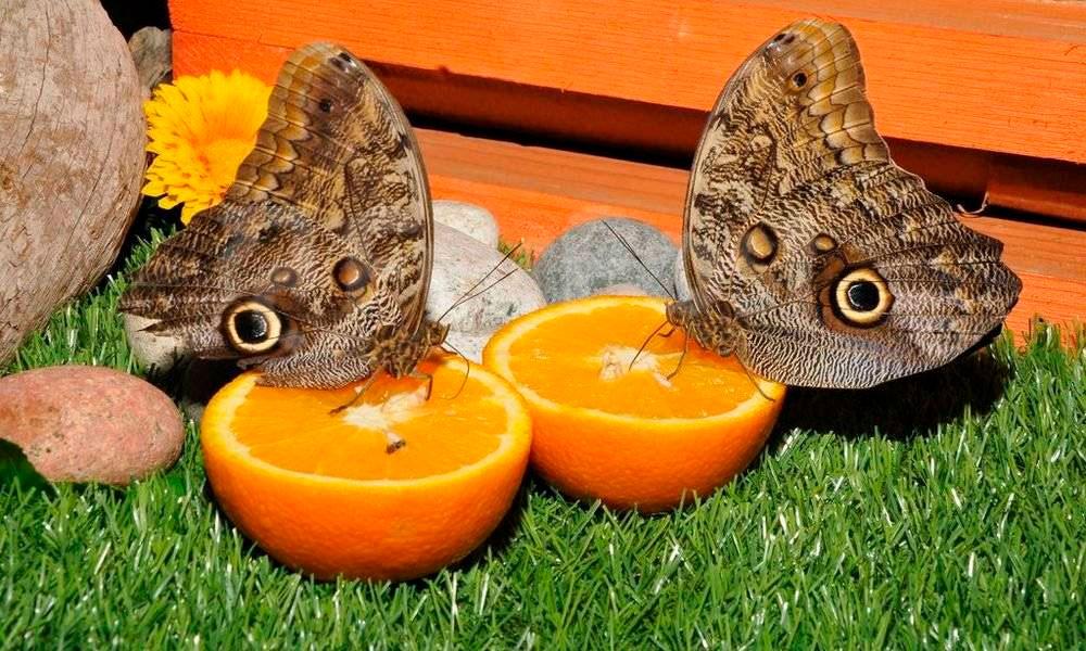 Дом бабочек «Восторг»