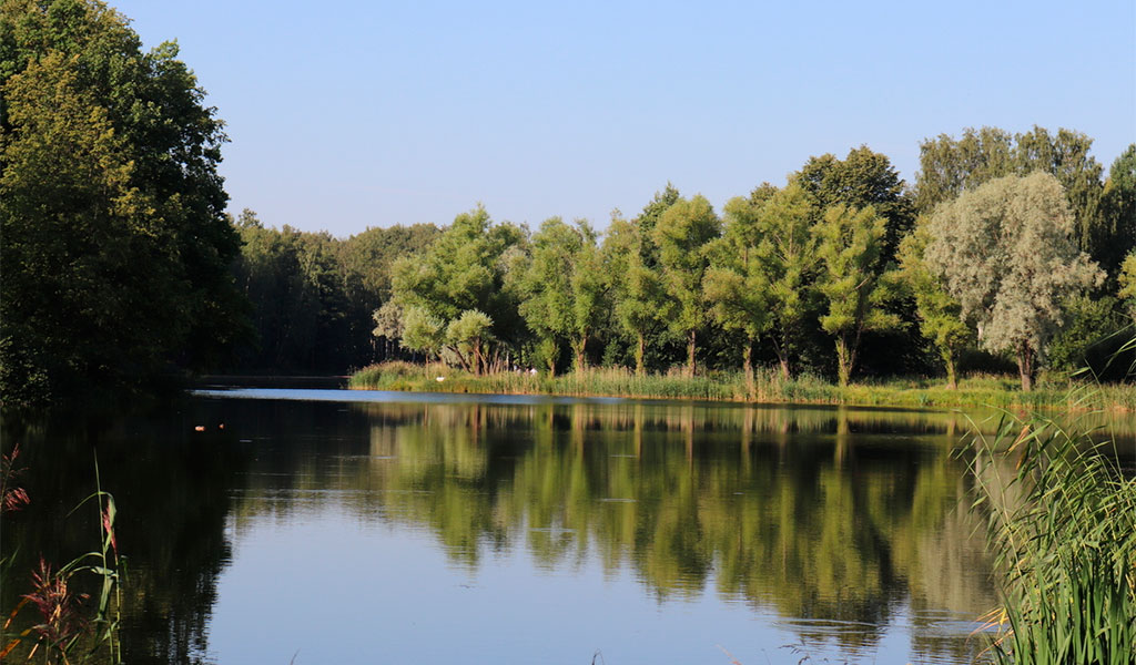 Английский парк